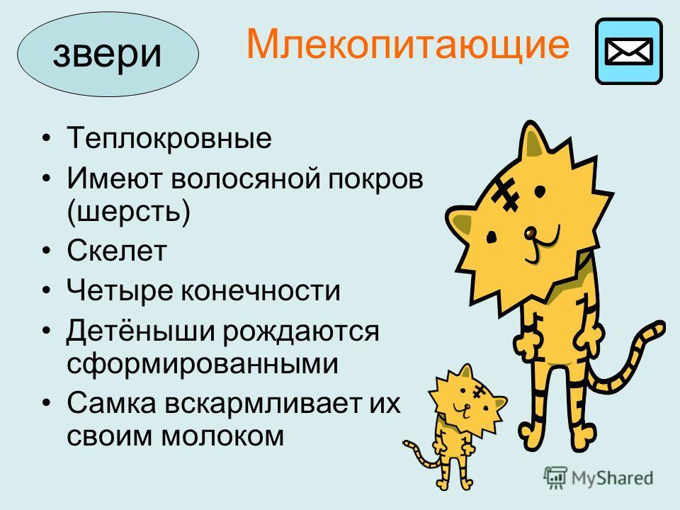 Млекопитающие звери Теплокровные Имеют волосяной покров (шерсть) Скелет Четыре конечности Детёныши рождаются сформированными Самка вскармливает их своим молоком