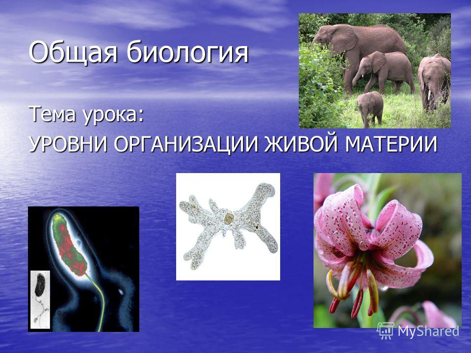 Общая биология Тема урока: УРОВНИ ОРГАНИЗАЦИИ ЖИВОЙ МАТЕРИИ