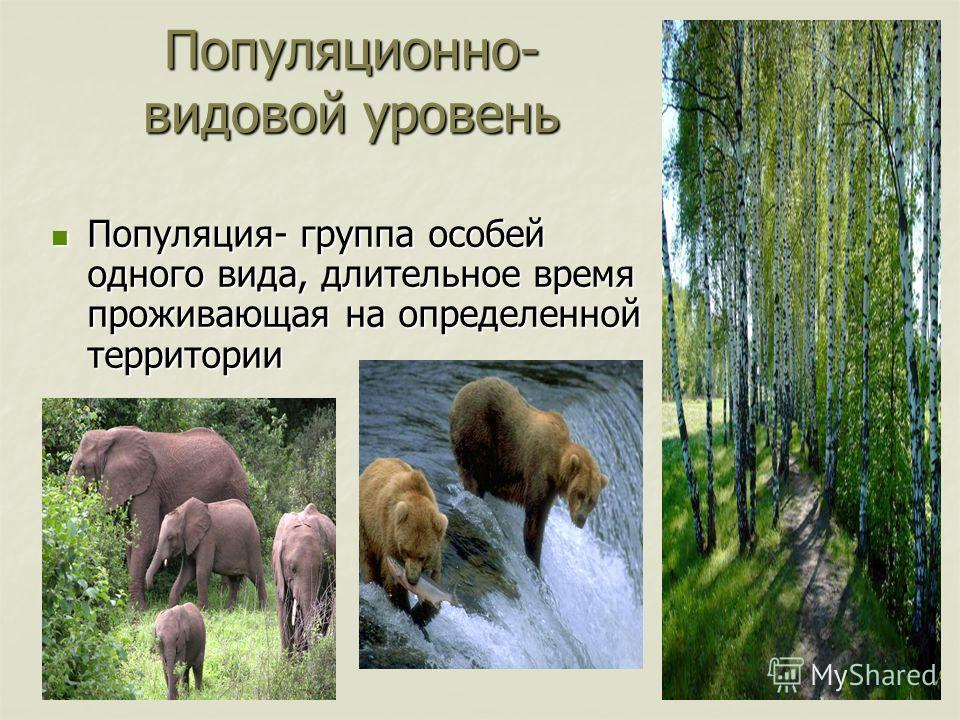 Популяционно- видовой уровень Популяция- группа особей одного вида, длительное время проживающая на определенной территории Популяция- группа особей одного вида, длительное время проживающая на определенной территории