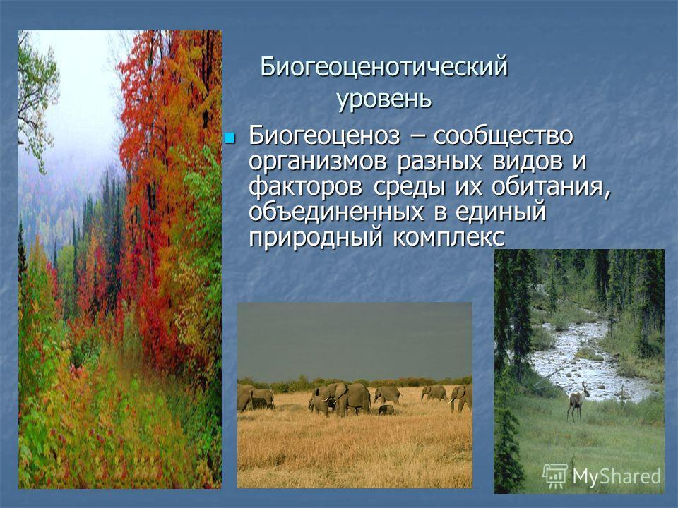 Биогеоценотический уровень Биогеоценоз – сообщество организмов разных видов и факторов среды их обитания, объединенных в единый природный комплекс Биогеоценоз – сообщество организмов разных видов и факторов среды их обитания, объединенных в единый пр