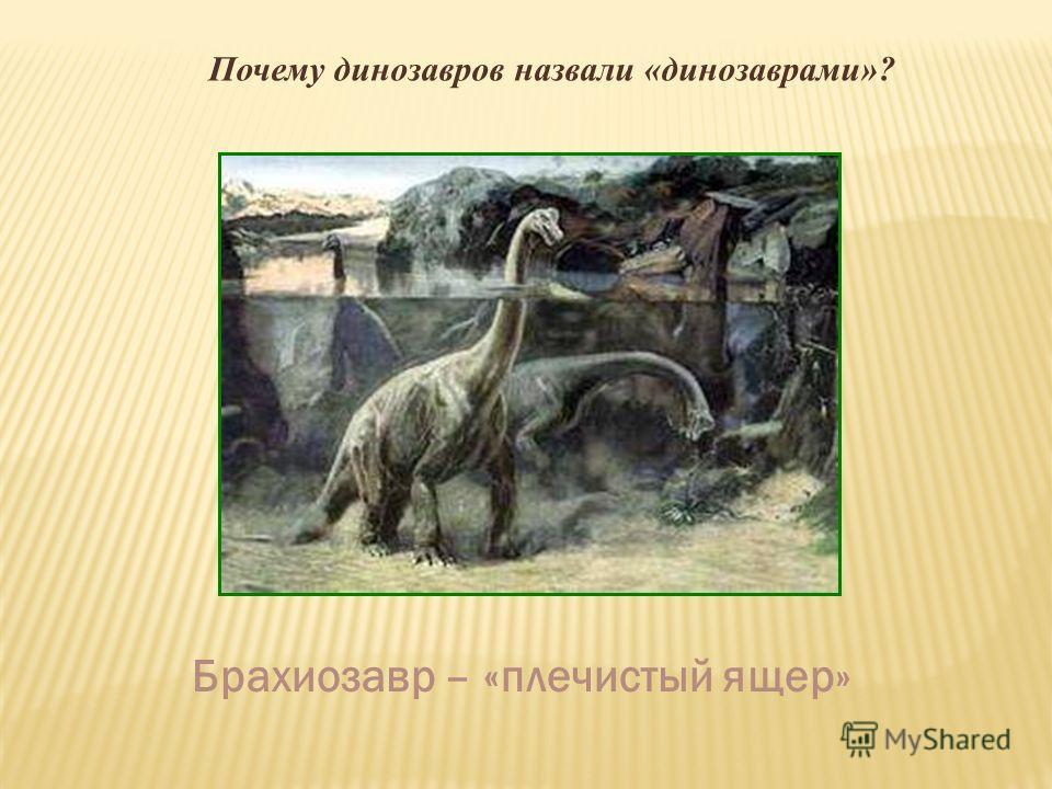 Почему динозавров назвали «динозаврами»? Брахиозавр – «плечистый ящер»