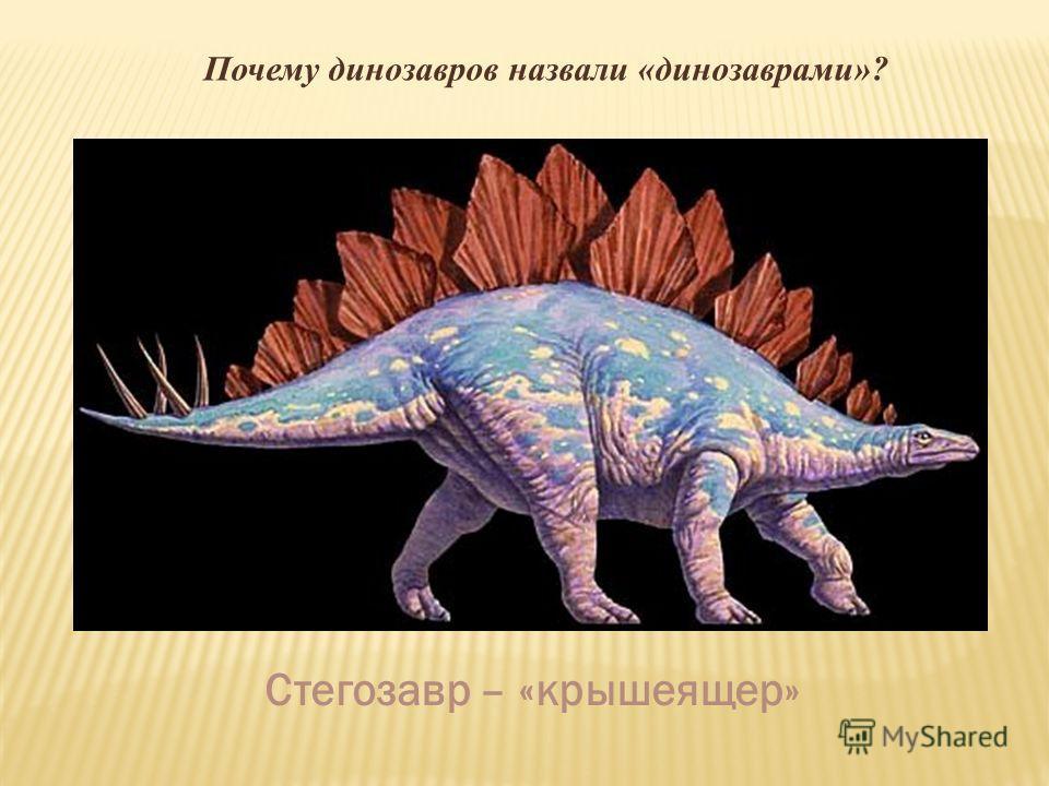 Почему динозавров назвали «динозаврами»? Стегозавр – «крышеящер»