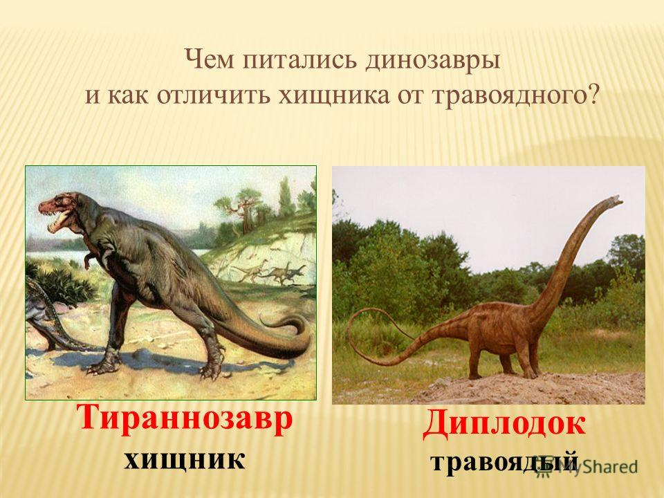 Чем питались динозавры и как отличить хищника от травоядного? Диплодок травоядый Тираннозавр хищник