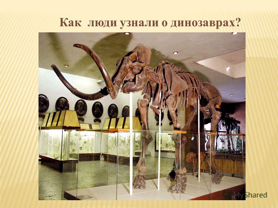 Как люди узнали о динозаврах?