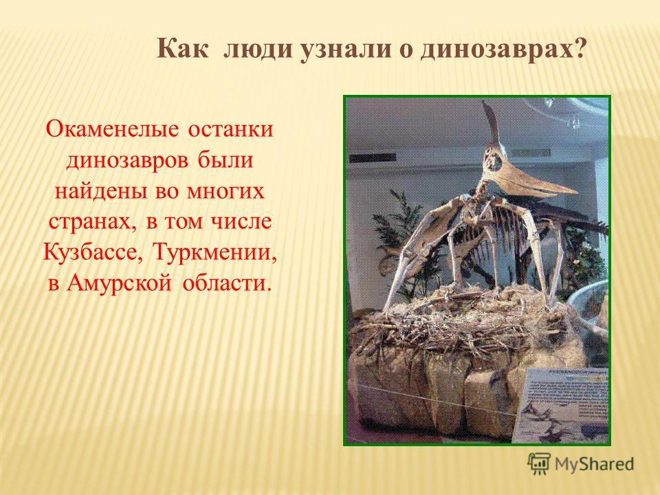 Окаменелые останки динозавров были найдены во многих странах, в том числе Кузбассе, Туркмении, в Амурской области.