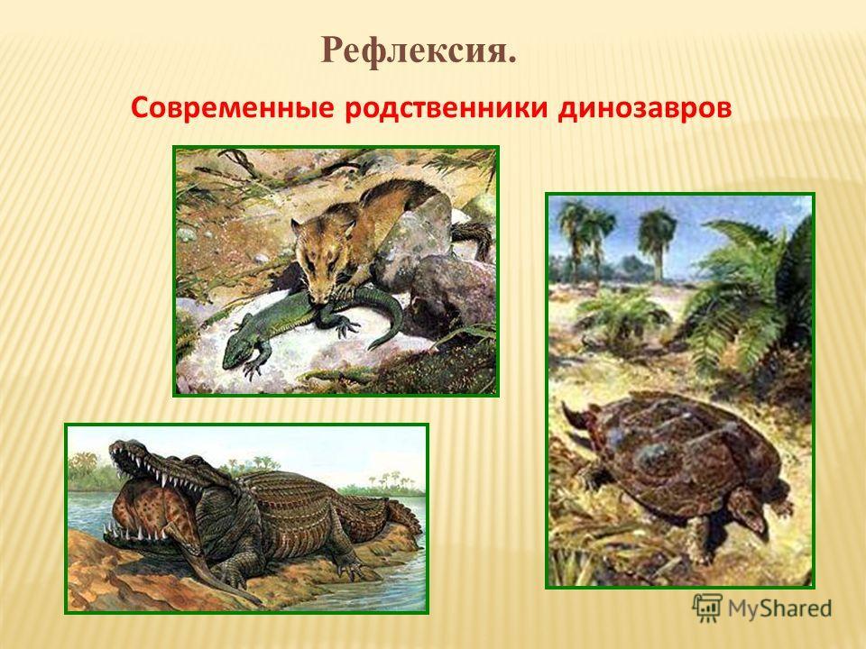 Рефлексия. Современные родственники динозавров