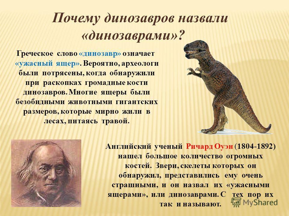 Почему динозавров назвали «динозаврами»? Греческое слово «динозавр» означает «ужасный ящер». Вероятно, археологи были потрясены, когда обнаружили при раскопках громадные кости динозавров. Многие ящеры были безобидными животными гигантских размеров, к