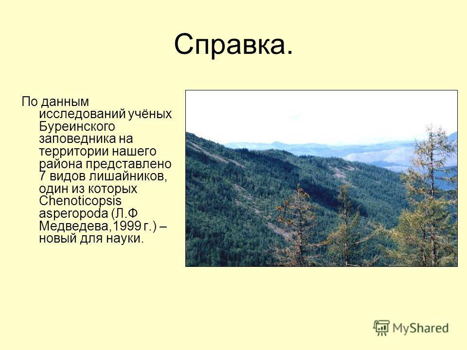 Справка. По данным исследований учёных Буреинского заповедника на территории нашего района представлено 7 видов лишайников, один из которых Chenoticopsis asperopoda (Л.Ф Медведева,1999 г.) – новый для науки.