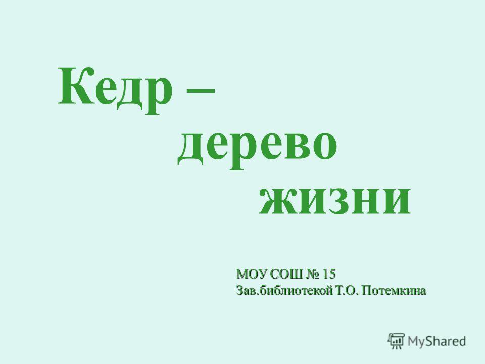 Кедр – дерево жизни МОУ СОШ 15 Зав.библиотекой Т.О. Потемкина