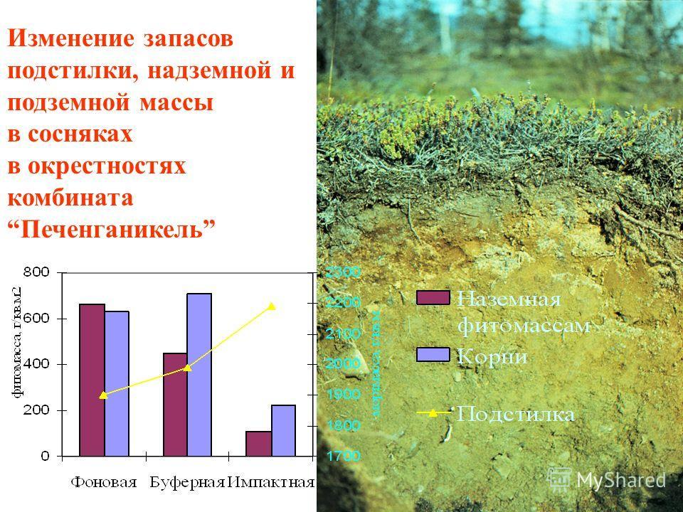 Изменение состава подчиненных ярусов растений в хвойных лесах в окрестностях комбината Североникель