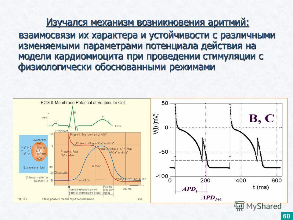 Изучался механизм возникновения аритмий: Изучался механизм возникновения аритмий: взаимосвязи их характера и устойчивости с различными изменяемыми параметрами потенциала действия на модели кардиомиоцита при проведении стимуляции с физиологически обос