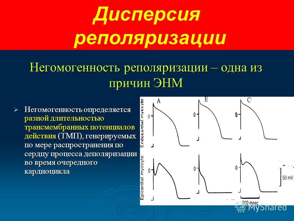 Негомогенность реполяризации – одна из причин ЭНМ Негомогенность определяется разной длительностью трансмембранных потенциалов действия (ТМП), генерируемых по мере распространения по сердцу процесса деполяризации во время очередного кардиоцикла Негом