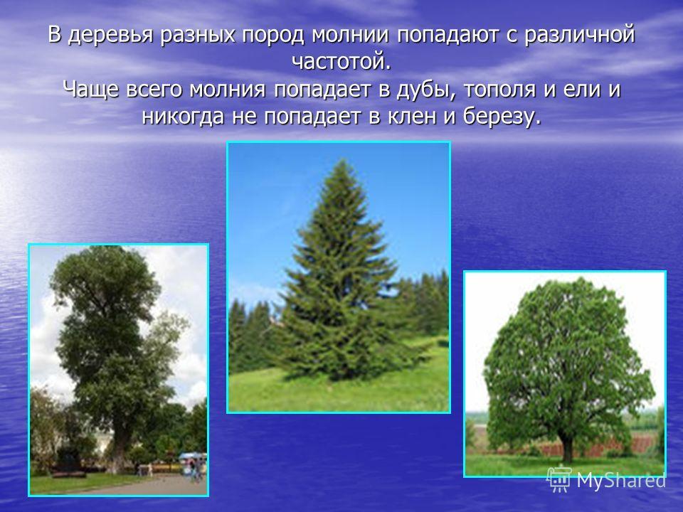 В деревья разных пород молнии попадают с различной частотой. Чаще всего молния попадает в дубы, тополя и ели и никогда не попадает в клен и березу.