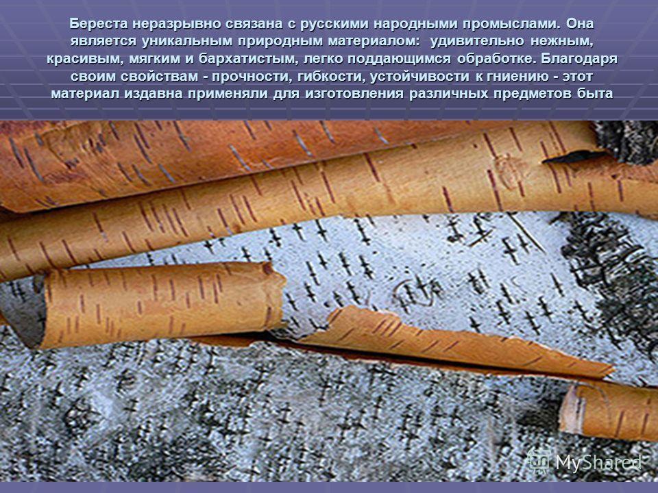 Береста неразрывно связана с русскими народными промыслами. Она является уникальным природным материалом: удивительно нежным, красивым, мягким и бархатистым, легко поддающимся обработке. Благодаря своим свойствам - прочности, гибкости, устойчивости к