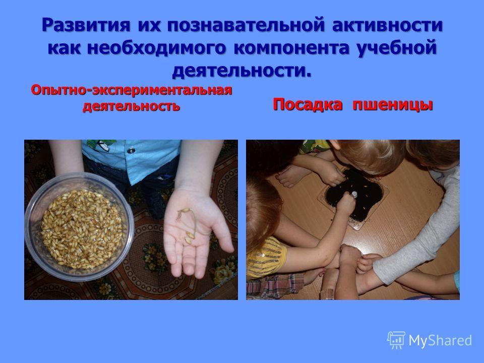 Развития их познавательной активности как необходимого компонента учебной деятельности. Опытно-экспериментальная деятельность Посадка пшеницы