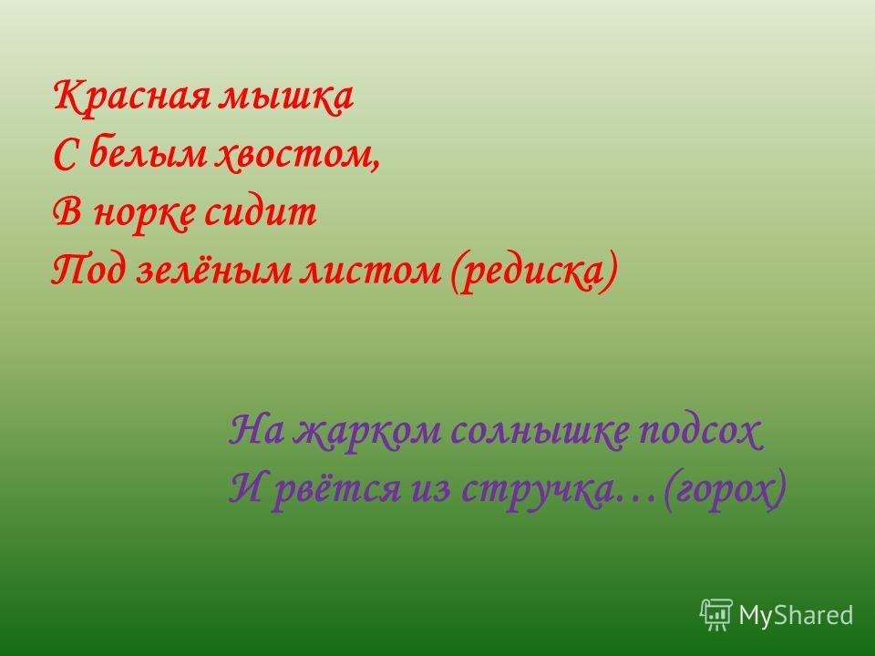 Красная мышка С белым хвостом, В норке сидит Под зелёным листом (редиска) На жарком солнышке подсох И рвётся из стручка…(горох)