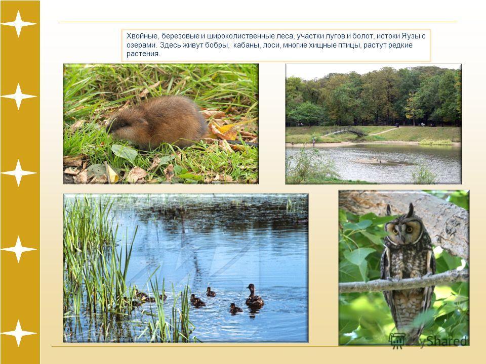 Хвойные, березовые и широколиственные леса, участки лугов и болот, истоки Яузы с озерами. Здесь живут бобры, кабаны, лоси, многие хищные птицы, растут редкие растения.