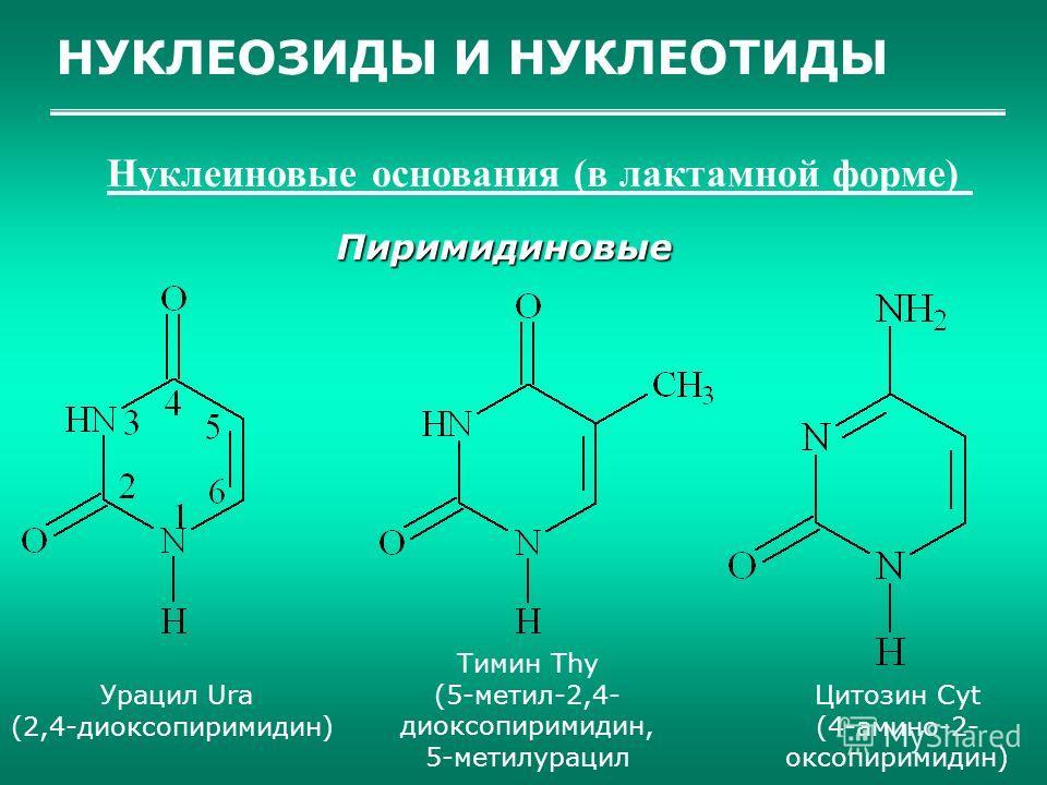 НУКЛЕОЗИДЫ И НУКЛЕОТИДЫ Нуклеиновые основания (в лактамной форме) Пиримидиновые Урацил Ura (2,4-диоксопиримидин) Тимин Thy (5-метил-2,4- диоксопиримидин, 5-метилурацил Цитозин Cyt (4-амино-2- оксопиримидин)