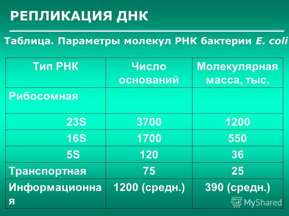 РЕПЛИКАЦИЯ ДНК Таблица. Параметры молекул РНК бактерии Е. соli Тип РНКЧисло оснований Молекулярная масса, тыс. Рибосомная 23S37001200 16S1700550 5S12036 Транспортная7525 Информационна я 1200 (средн.)390 (средн.)