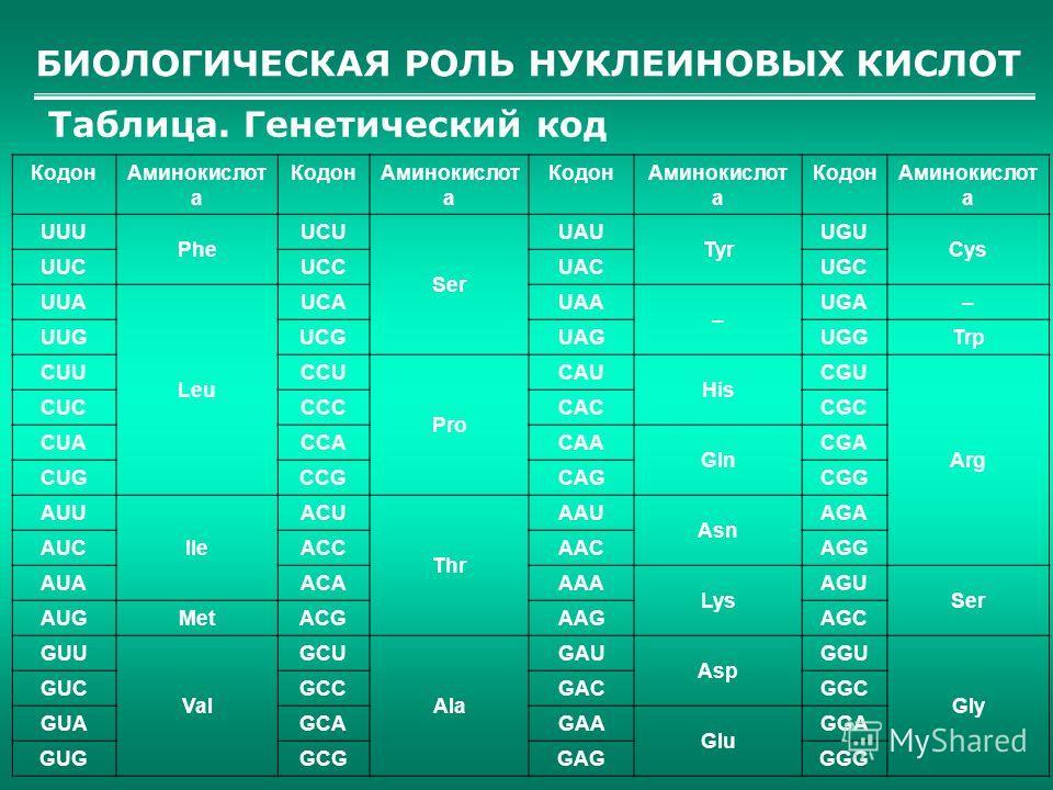БИОЛОГИЧЕСКАЯ РОЛЬ НУКЛЕИНОВЫХ КИСЛОТ Таблица. Генетический код КодонАминокислот а КодонАминокислот а КодонАминокислот а КодонАминокислот а UUU Phe UCU Ser UAU Tyr UGU Cys UUCUCCUACUGC UUA Leu UCAUAA – UGA– UUGUCGUAGUGGTrp CUUCCU Pro CAU His CGU Arg