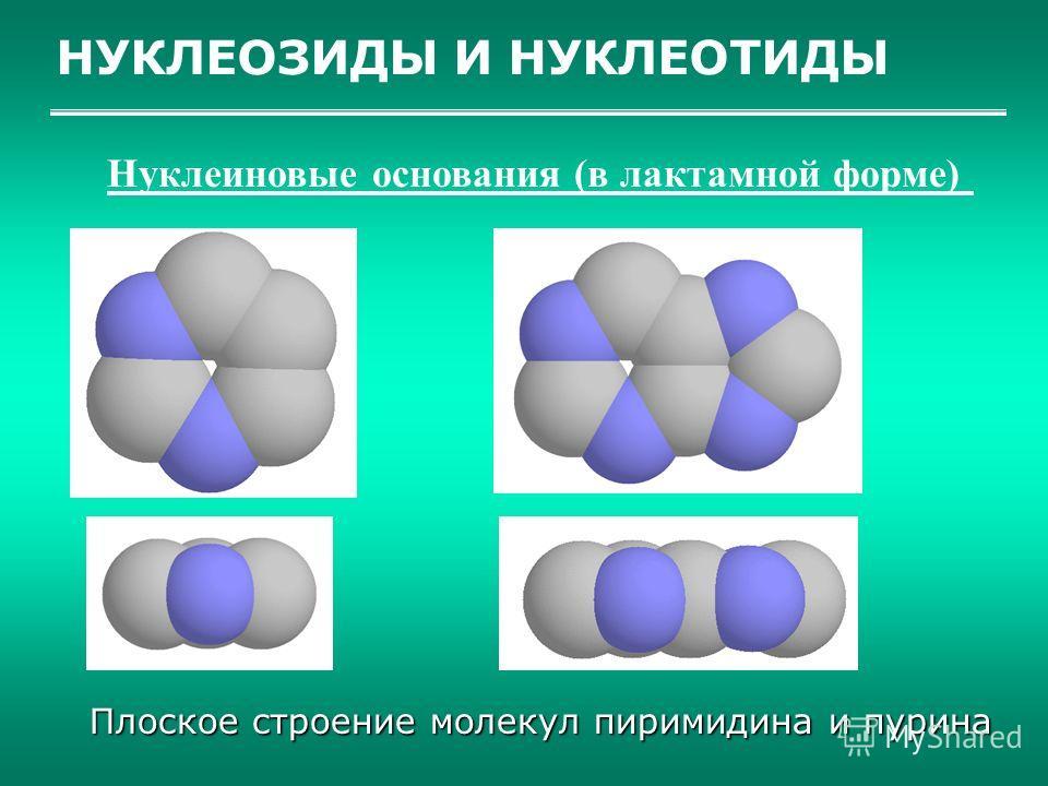 НУКЛЕОЗИДЫ И НУКЛЕОТИДЫ Нуклеиновые основания (в лактамной форме) Плоское строение молекул пиримидина и пурина