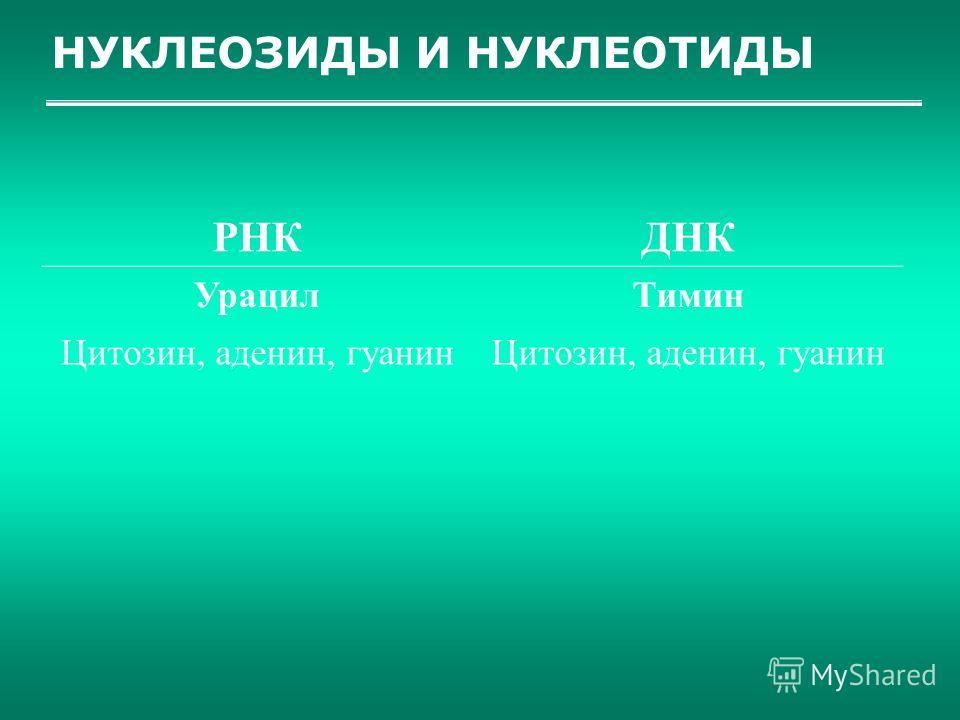 НУКЛЕОЗИДЫ И НУКЛЕОТИДЫ РНКДНК УрацилТимин Цитозин, аденин, гуанин