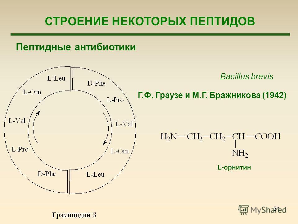 31 Пептидные антибиотики Bacillus brevis Г.Ф. Граузе и М.Г. Бражникова (1942) L-орнитин СТРОЕНИЕ НЕКОТОРЫХ ПЕПТИДОВ