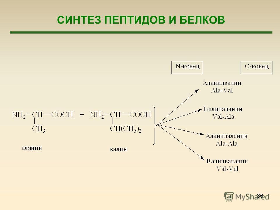 36 СИНТЕЗ ПЕПТИДОВ И БЕЛКОВ