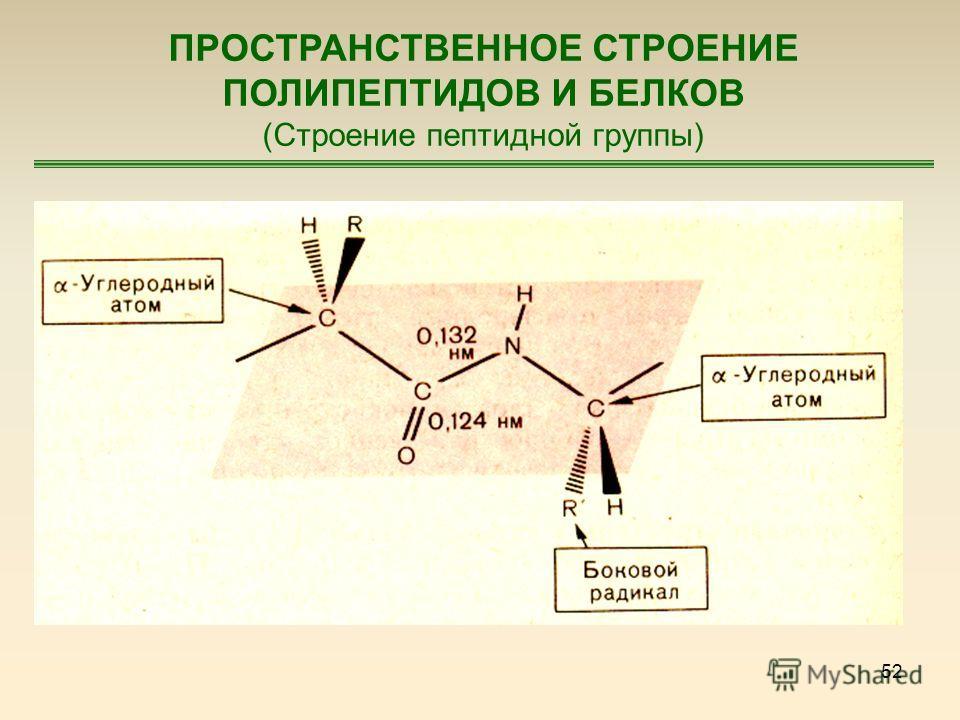 52 ПРОСТРАНСТВЕННОЕ СТРОЕНИЕ ПОЛИПЕПТИДОВ И БЕЛКОВ (Строение пептидной группы)