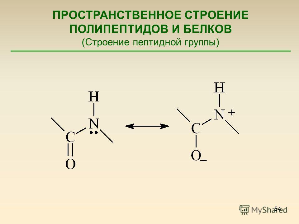 54 ПРОСТРАНСТВЕННОЕ СТРОЕНИЕ ПОЛИПЕПТИДОВ И БЕЛКОВ (Строение пептидной группы)