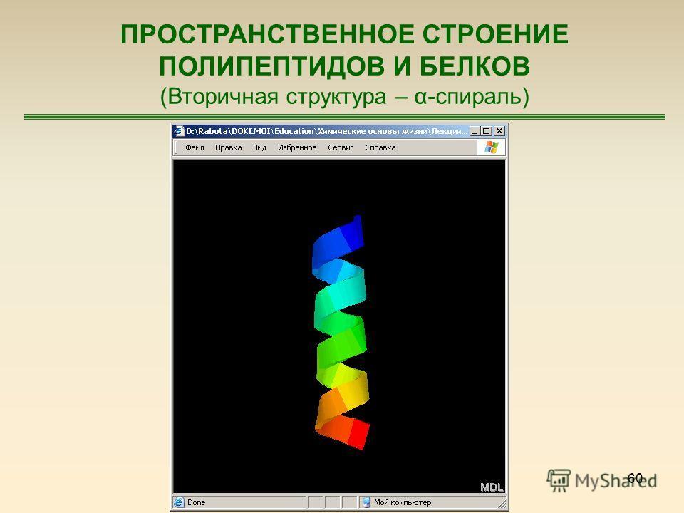 60 ПРОСТРАНСТВЕННОЕ СТРОЕНИЕ ПОЛИПЕПТИДОВ И БЕЛКОВ (Вторичная структура – α-спираль)