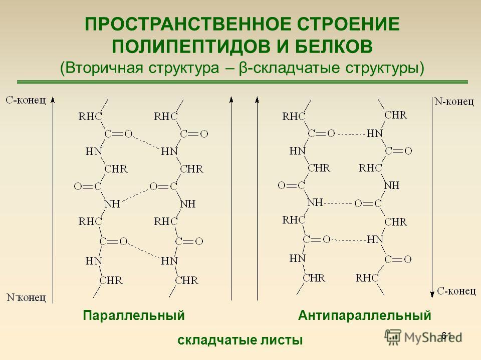 61 ПРОСТРАНСТВЕННОЕ СТРОЕНИЕ ПОЛИПЕПТИДОВ И БЕЛКОВ (Вторичная структура – β-складчатые структуры) ПараллельныйАнтипараллельный складчатые листы