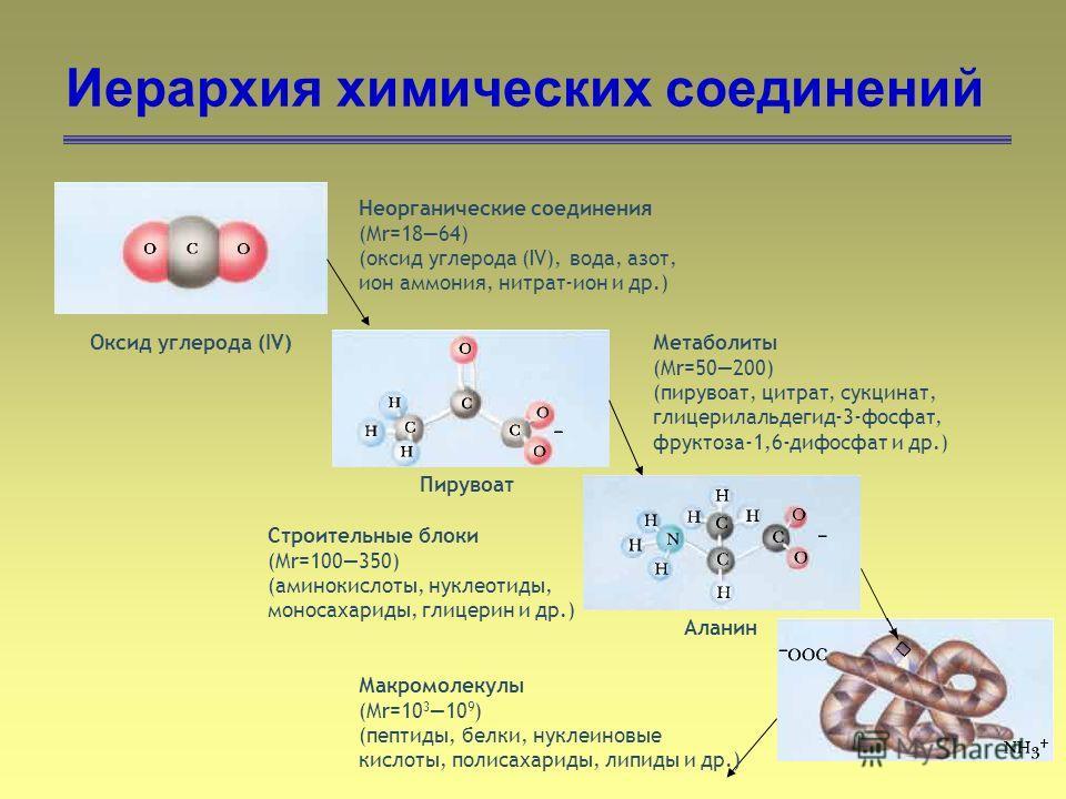 11 Иерархия химических соединений Неорганические соединения (Mr=1864) (оксид углерода (IV), вода, азот, ион аммония, нитрат-ион и др.) Оксид углерода (IV)Метаболиты (Mr=50200) (пирувоат, цитрат, сукцинат, глицерилальдегид-3-фосфат, фруктоза-1,6-дифос