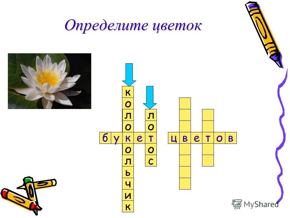 л о к о л еутвцб с в о оте Определите цветок о л ь о к ч и к