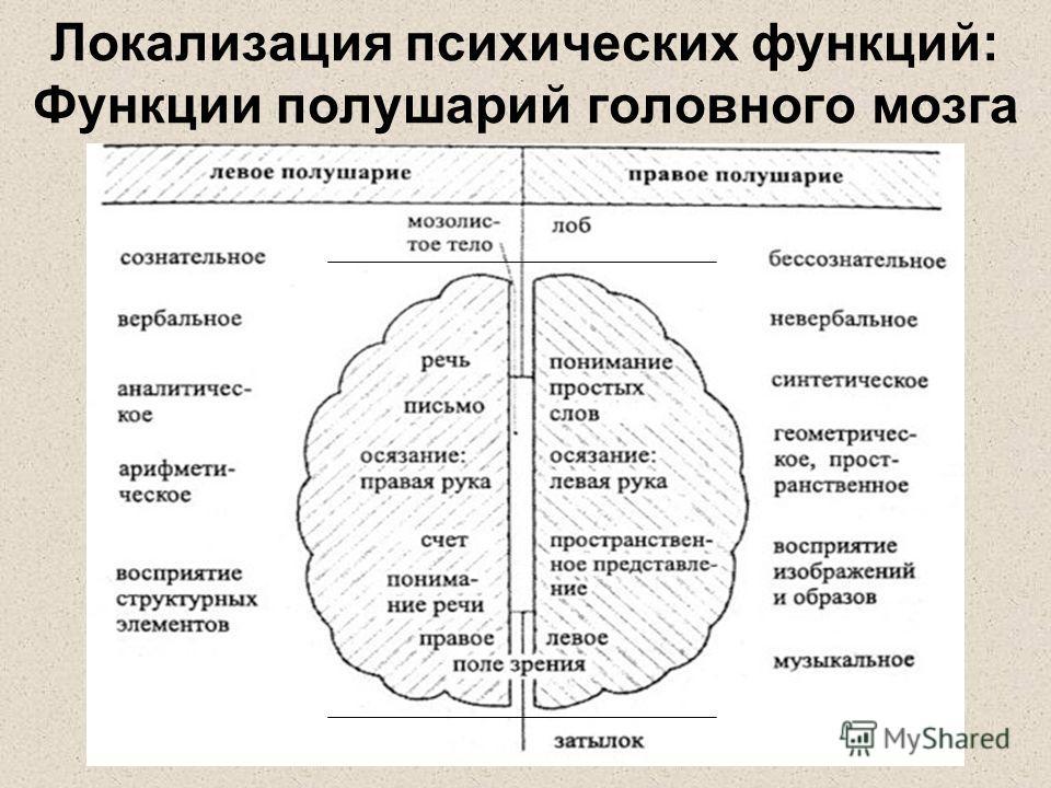 Локализация психических функций: Функции полушарий головного мозга