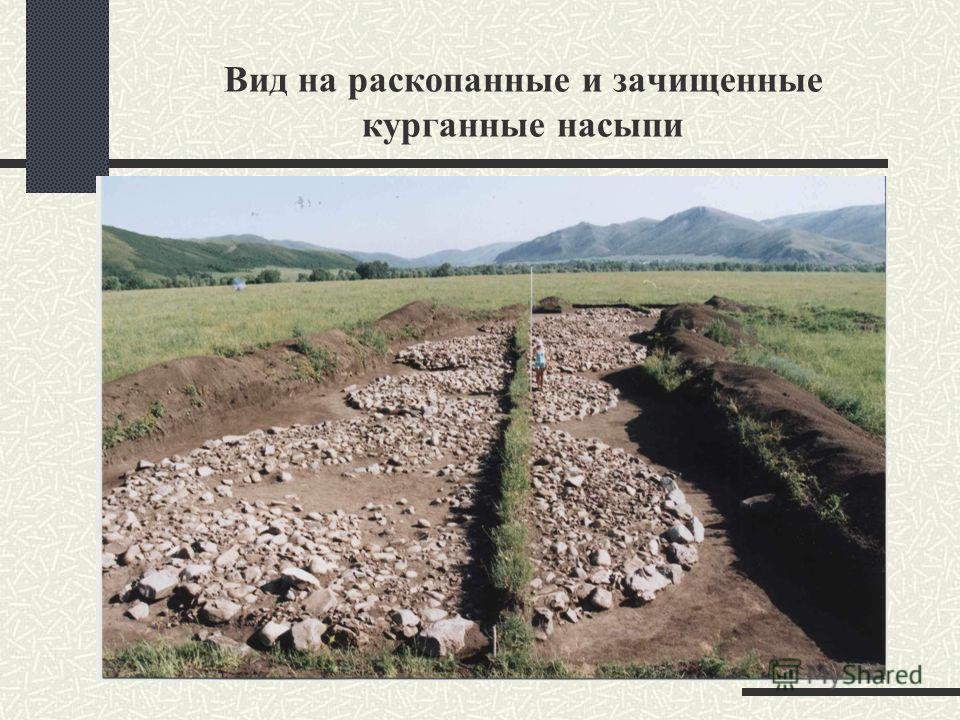 Вид на раскопанные и зачищенные курганные насыпи