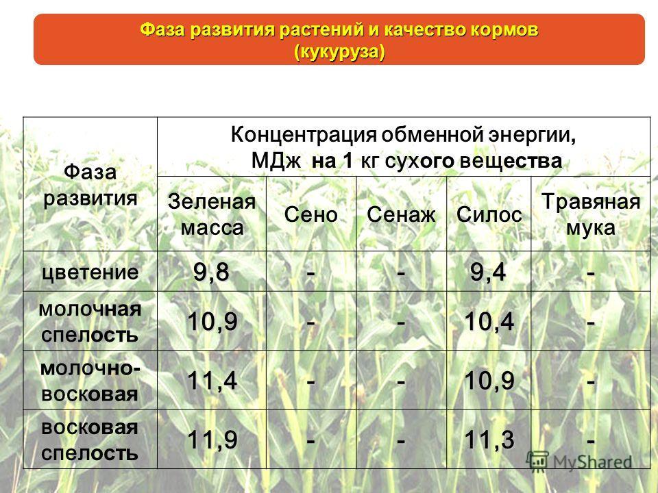 Фаза развития растений и качество кормов (кукуруза) Фаза развития Концентрация обменной энергии, МДж на 1 кг сух ого вещ ества Зеленая масса СеноСенажСилос Травяная мука цветение9,8--9,4- молоч ная спел ость10,9--10,4- м олоч но- воск овая11,4--10,9-