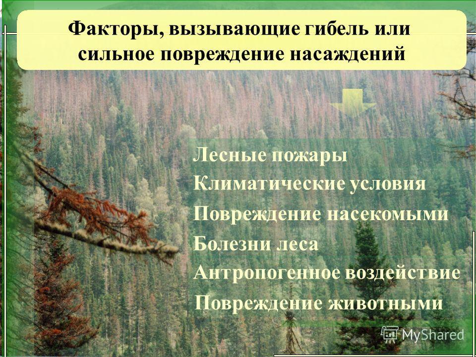 Лесные пожары Климатические условия Повреждение насекомыми Болезни леса Антропогенное воздействие Повреждение животными Факторы, вызывающие гибель или сильное повреждение насаждений