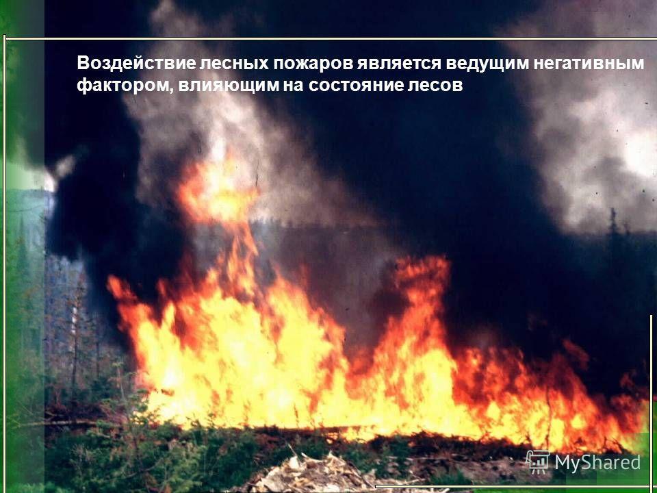 8 Воздействие лесных пожаров является ведущим негативным фактором, влияющим на состояние лесов