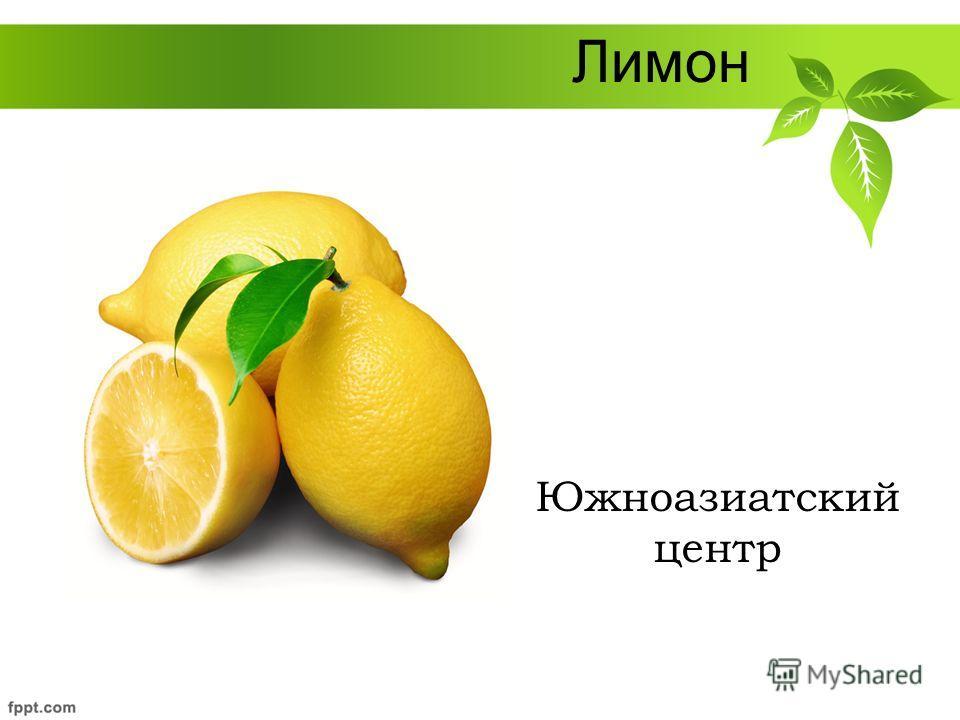Лимон Южноазиатский центр