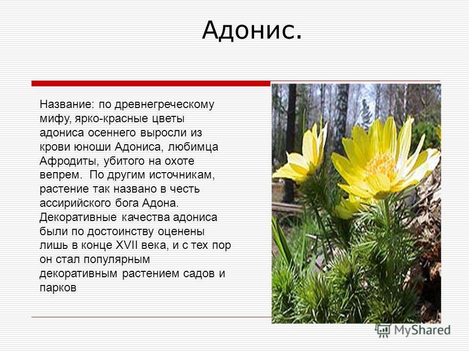 лечебные травы с фото с названиями