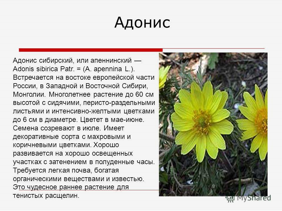 Лекарственные растения россии книга скачать бесплатно