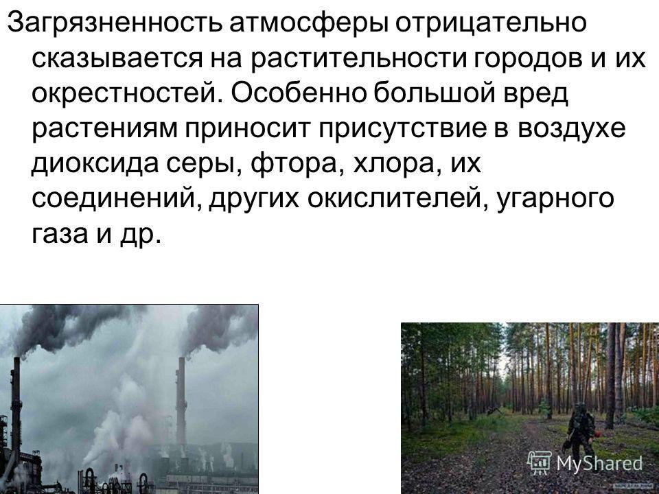 Загрязненность атмосферы отрицательно сказывается на растительности городов и их окрестностей. Особенно большой вред растениям приносит присутствие в воздухе диоксида серы, фтора, хлора, их соединений, других окислителей, угарного газа и др.