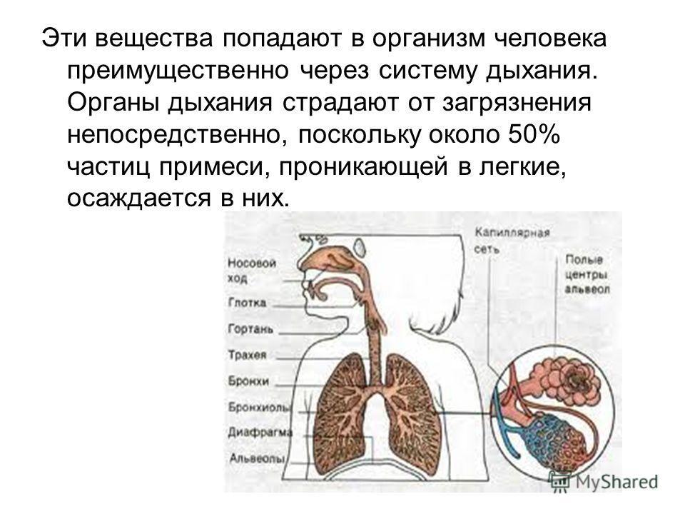 Эти вещества попадают в организм человека преимущественно через систему дыхания. Органы дыхания страдают от загрязнения непосредственно, поскольку около 50% частиц примеси, проникающей в легкие, осаждается в них.