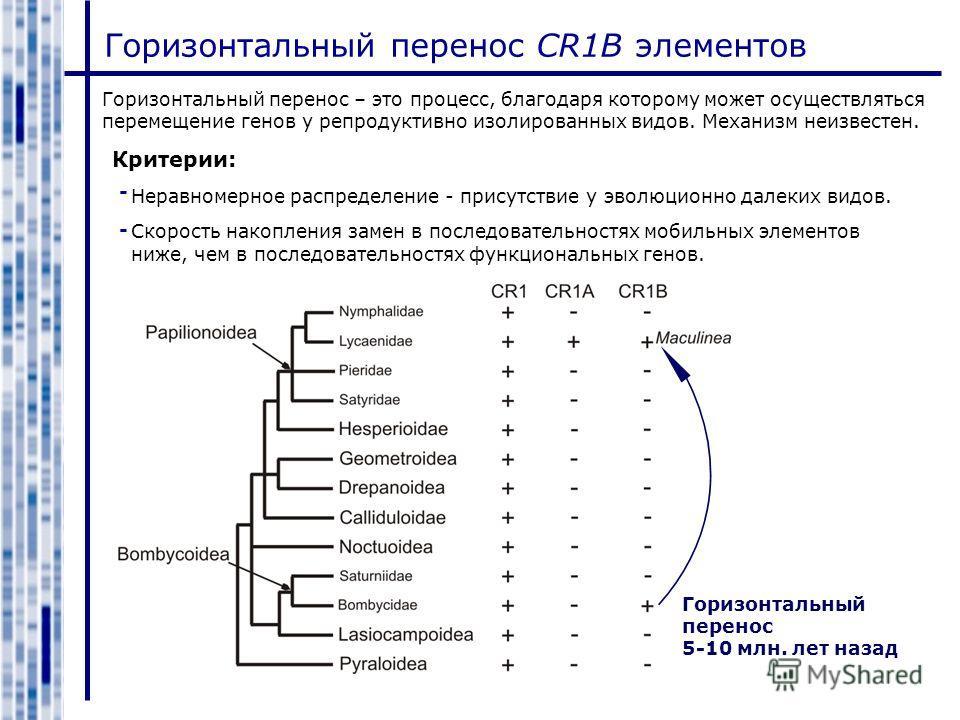 Горизонтальный перенос CR1B элементов Горизонтальный перенос – это процесс, благодаря которому может осуществляться перемещение генов у репродуктивно изолированных видов. Механизм неизвестен. Критерии: Неравномерное распределение - присутствие у эвол