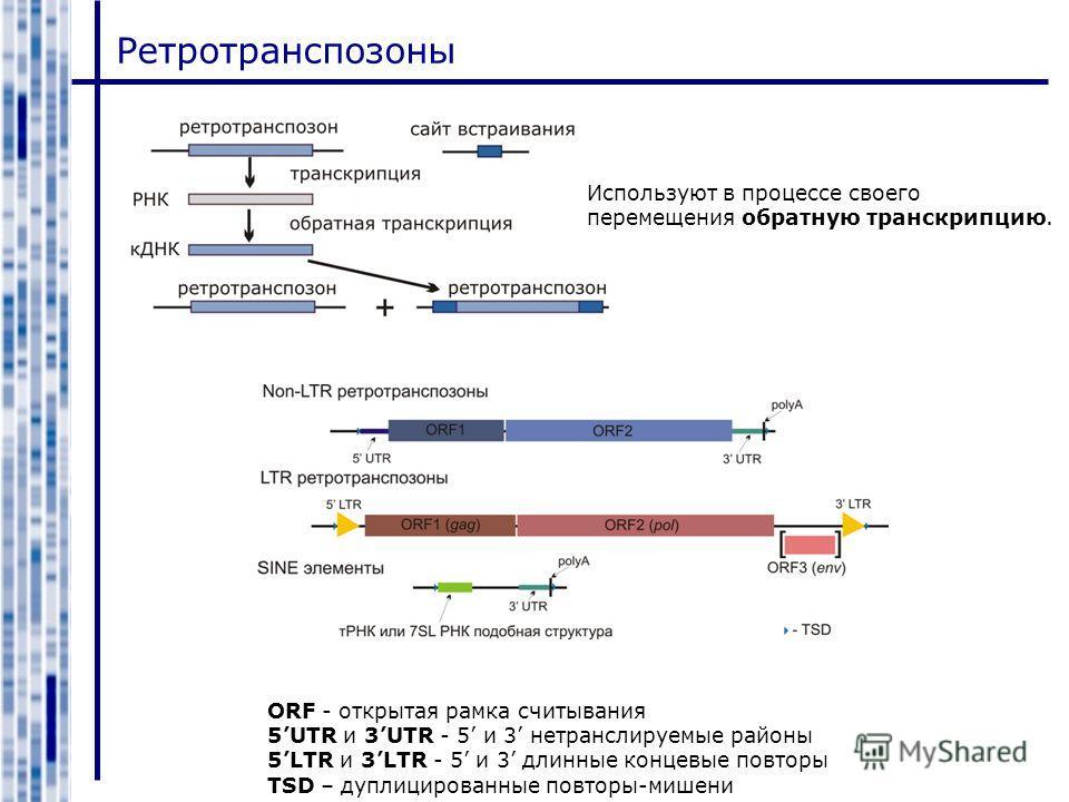 Ретротранспозоны ORF - открытая рамка считывания 5UTR и 3UTR - 5 и 3 нетранслируемые районы 5LTR и 3LTR - 5 и 3 длинные концевые повторы TSD – дуплицированные повторы-мишени Используют в процессе своего перемещения обратную транскрипцию.