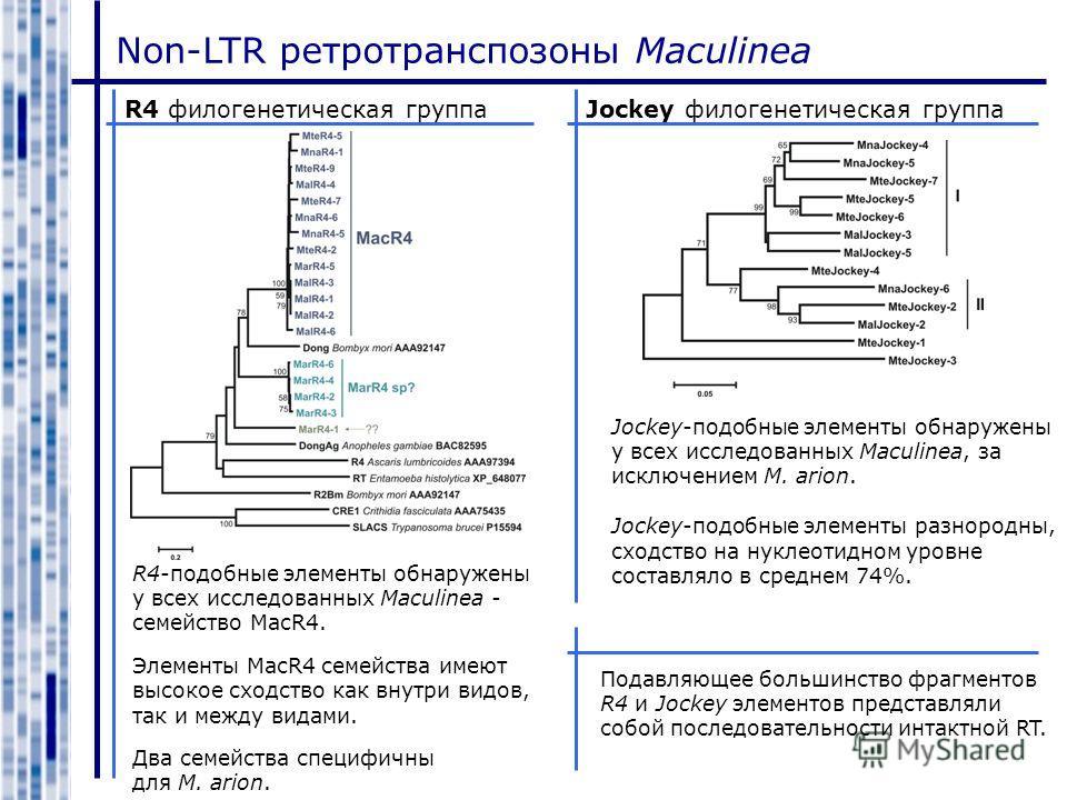 Non-LTR ретротранспозоны Maculinea Jockey филогенетическая группаR4 филогенетическая группа R4-подобные элементы обнаружены у всех исследованных Maculinea - семейство MacR4. Элементы MacR4 семейства имеют высокое сходство как внутри видов, так и межд
