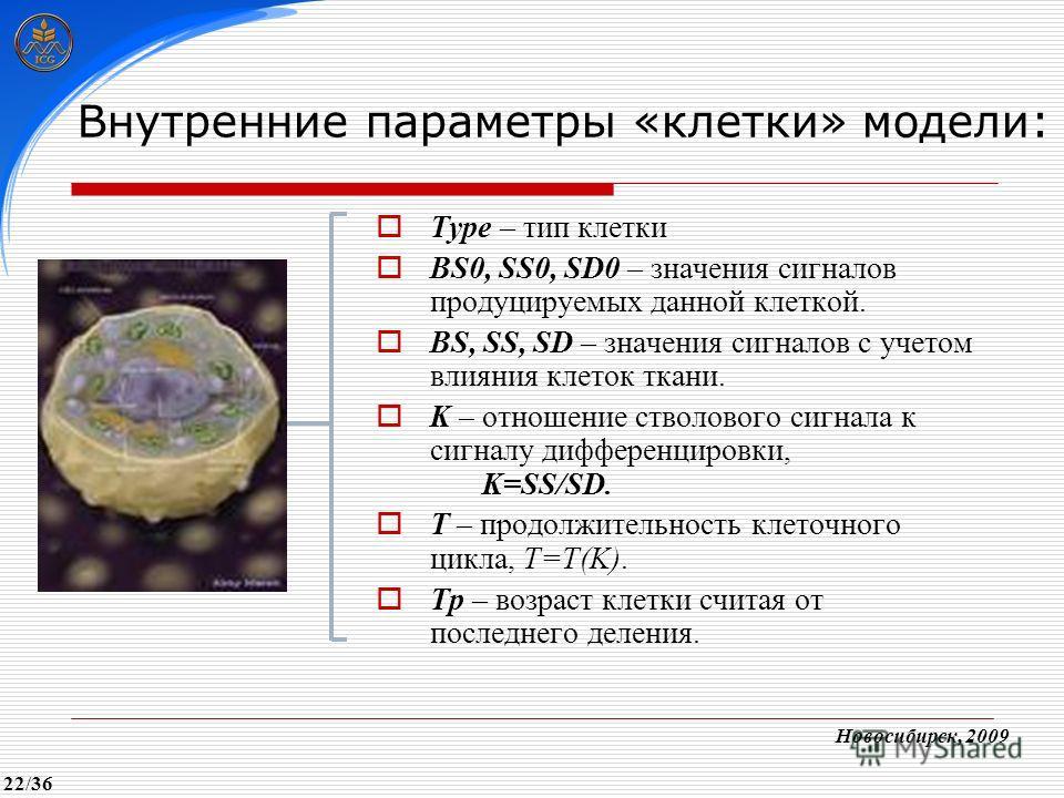 Type – тип клетки BS0, SS0, SD0 – значения сигналов продуцируемых данной клеткой. BS, SS, SD – значения сигналов с учетом влияния клеток ткани. K – отношение стволового сигнала к сигналу дифференцировки, K=SS/SD. T – продолжительность клеточного цикл