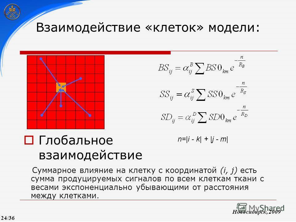 Взаимодействие «клеток» модели: Глобальное взаимодействие Новосибирск, 2009 Суммарное влияние на клетку с координатой (i, j) есть сумма продуцируемых сигналов по всем клеткам ткани с весами экспоненциально убывающими от расстояния между клетками. n=|