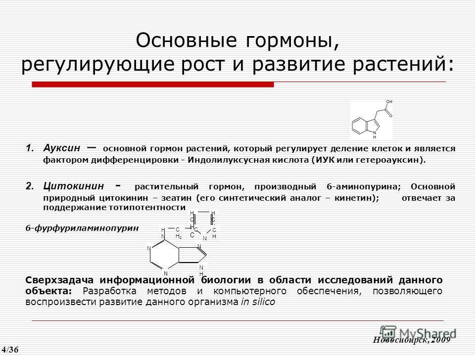 Основные гормоны, регулирующие рост и развитие растений: Новосибирск, 2009 1.Ауксин – основной гормон растений, который регулирует деление клеток и является фактором дифференцировки - Индолилуксусная кислота (ИУК или гетероауксин). 2.Цитокинин - раст